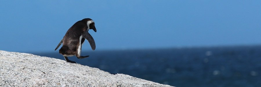 Penguin 4.0 Update bei Google